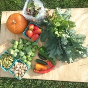 September: Pumpkins, Winter Squash, Plum Tomatoes, Brussels Sprouts, Edamame, Arugula, Spinach, Apples