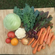 August: Tomatoes, Cauliflower, Cabbage, Corn, Beans, Potatoes, Peppers, Onions, Celery, Raspberries
